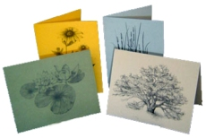 Jennifer's Art Print Cards - sold in sets or individually