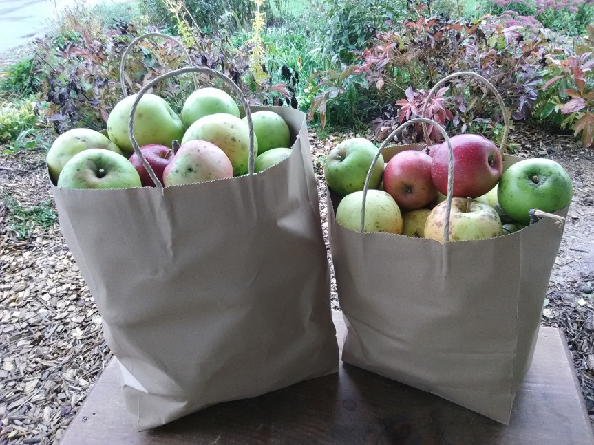 Apples for Sale at Medley Acres