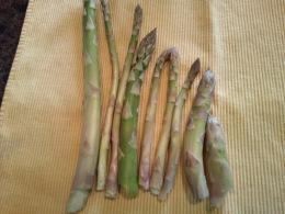 our wild asparagus