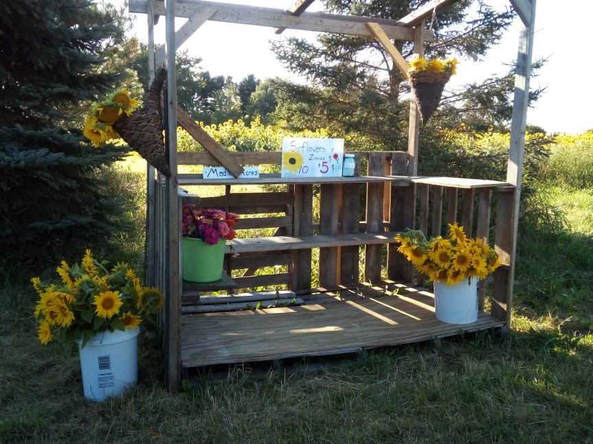 Sunflowers and Zinnias For Sale